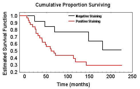 The Kaplan-Meier estimate of the survivor function for women with negatively and positively stained tumours
